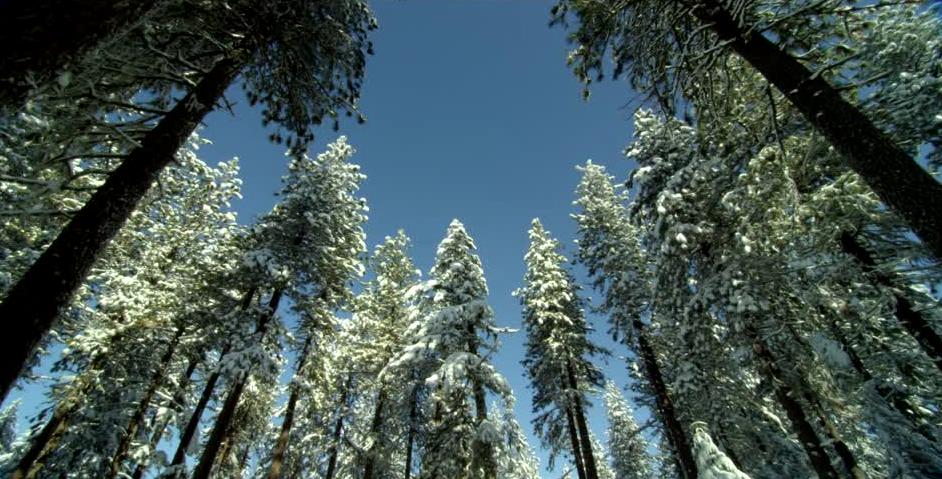 bosque calamburia impro