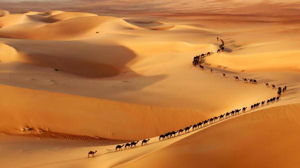 Camellos desierto marquesas