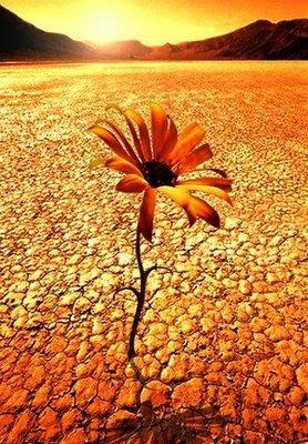 amor desierto calamburia